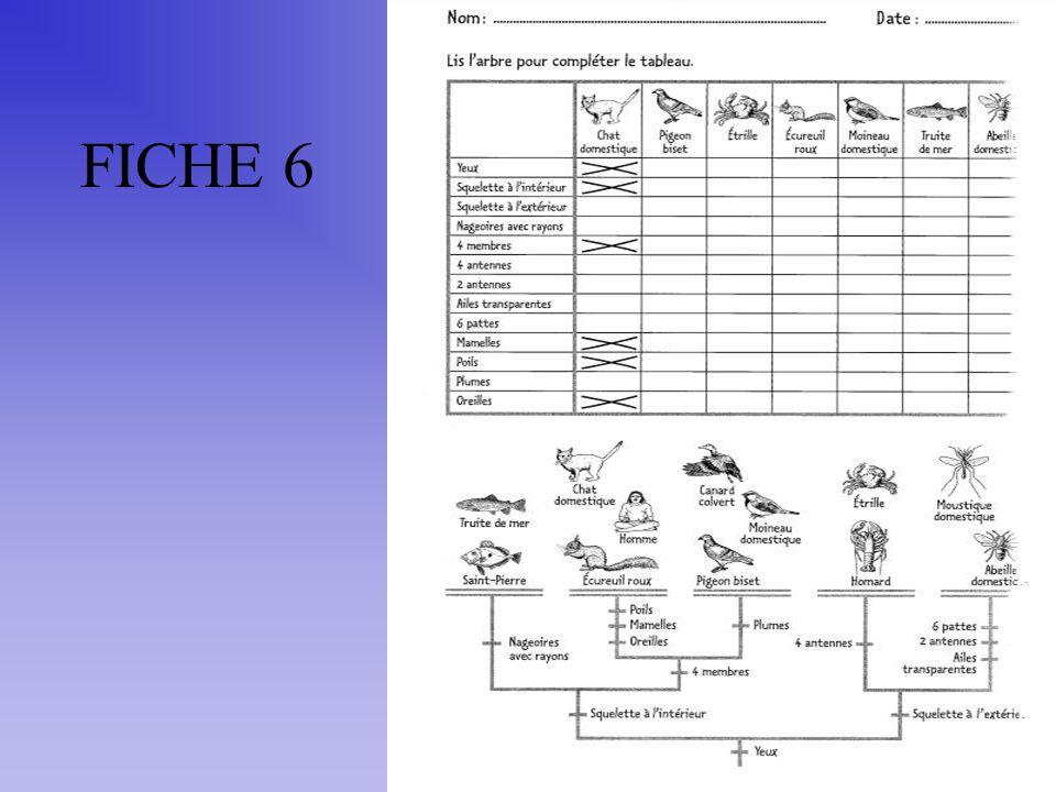FICHE 6
