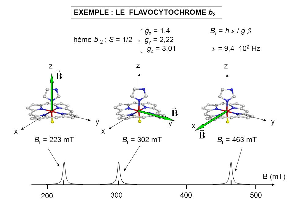 EXEMPLE : LE FLAVOCYTOCHROME b2