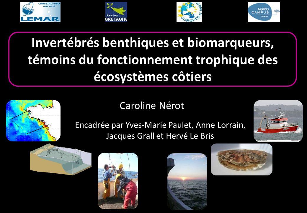 Invertébrés benthiques et biomarqueurs, témoins du fonctionnement trophique des écosystèmes côtiers