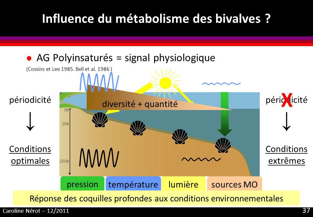 Influence du métabolisme des bivalves