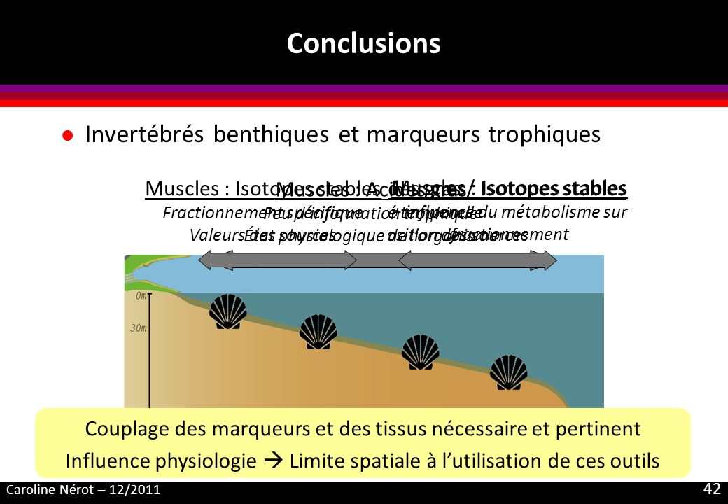 Conclusions Invertébrés benthiques et marqueurs trophiques
