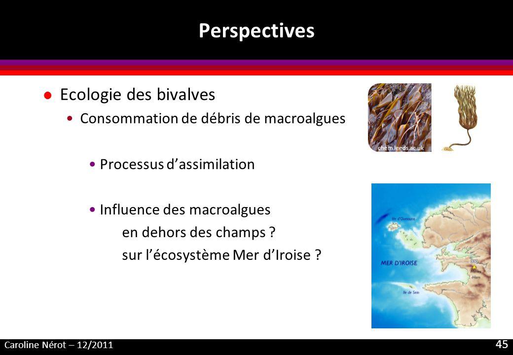 Perspectives Ecologie des bivalves