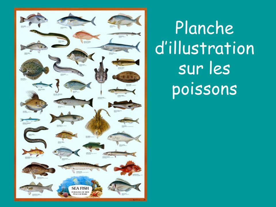 Planche d'illustration sur les poissons