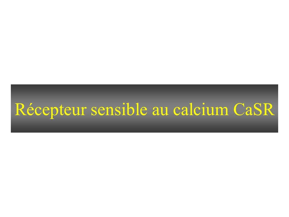 Récepteur sensible au calcium CaSR