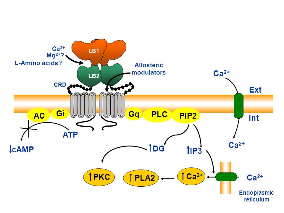 Allosteric modulators