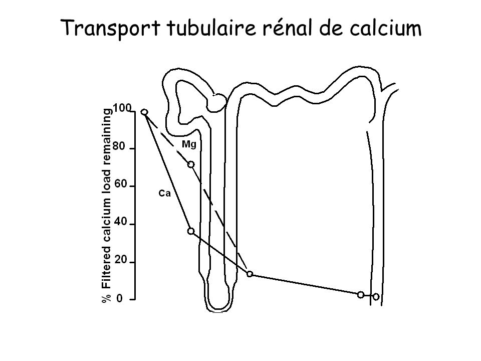Transport tubulaire rénal de calcium