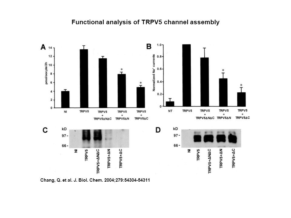 Functional analysis of TRPV5 channel assembly