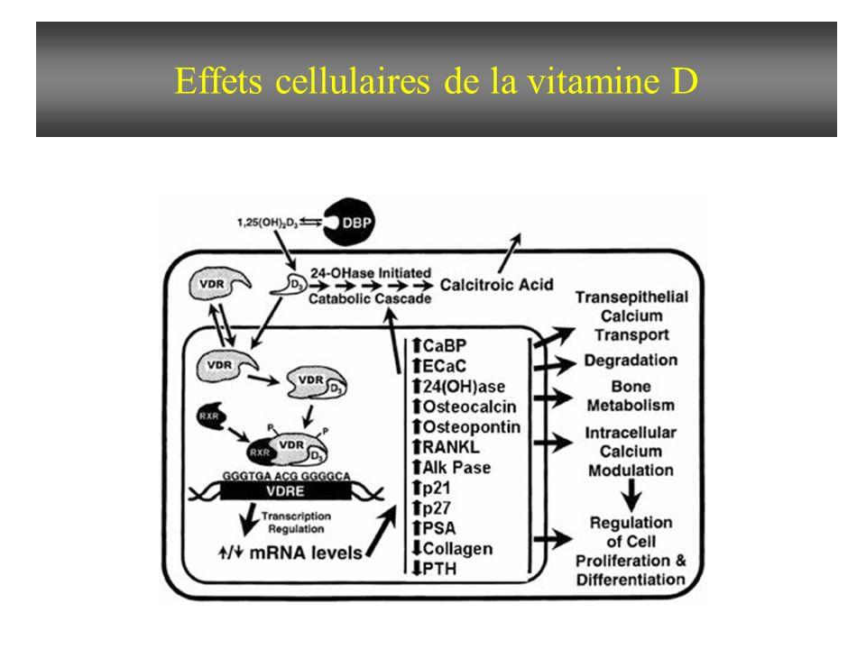 Effets cellulaires de la vitamine D