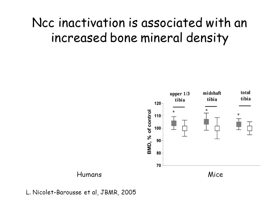 Ncc inactivation is associated with an increased bone mineral density