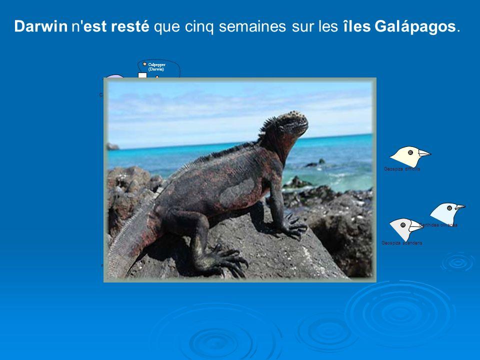 Darwin n est resté que cinq semaines sur les îles Galápagos.