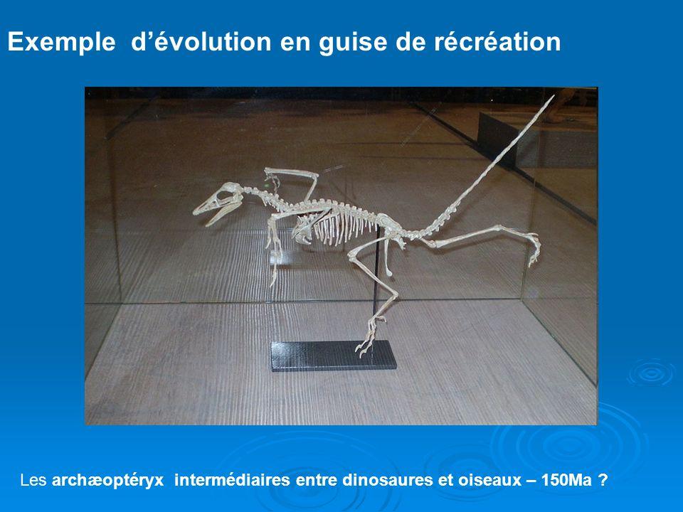 Exemple d'évolution en guise de récréation