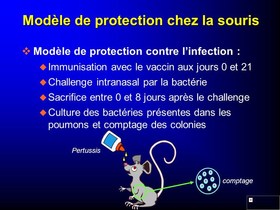 Modèle de protection chez la souris