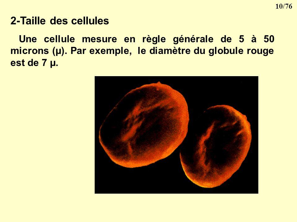 2-Taille des cellules Une cellule mesure en règle générale de 5 à 50 microns (µ).
