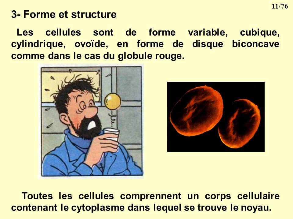3- Forme et structure