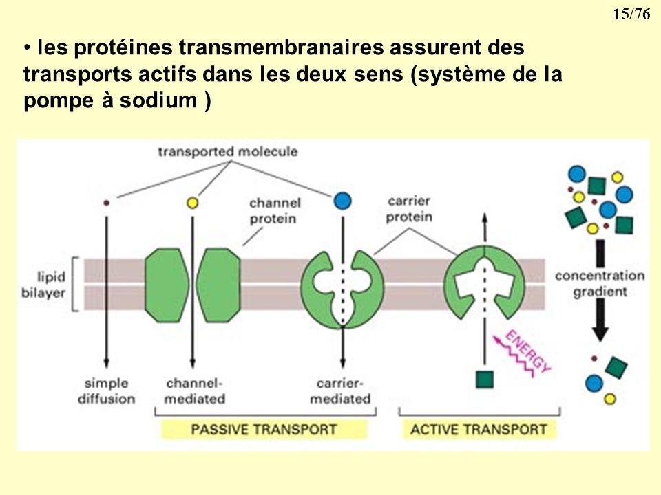 les protéines transmembranaires assurent des transports actifs dans les deux sens (système de la pompe à sodium )