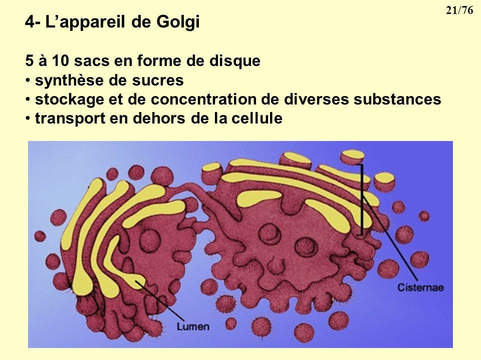 4- L'appareil de Golgi 5 à 10 sacs en forme de disque