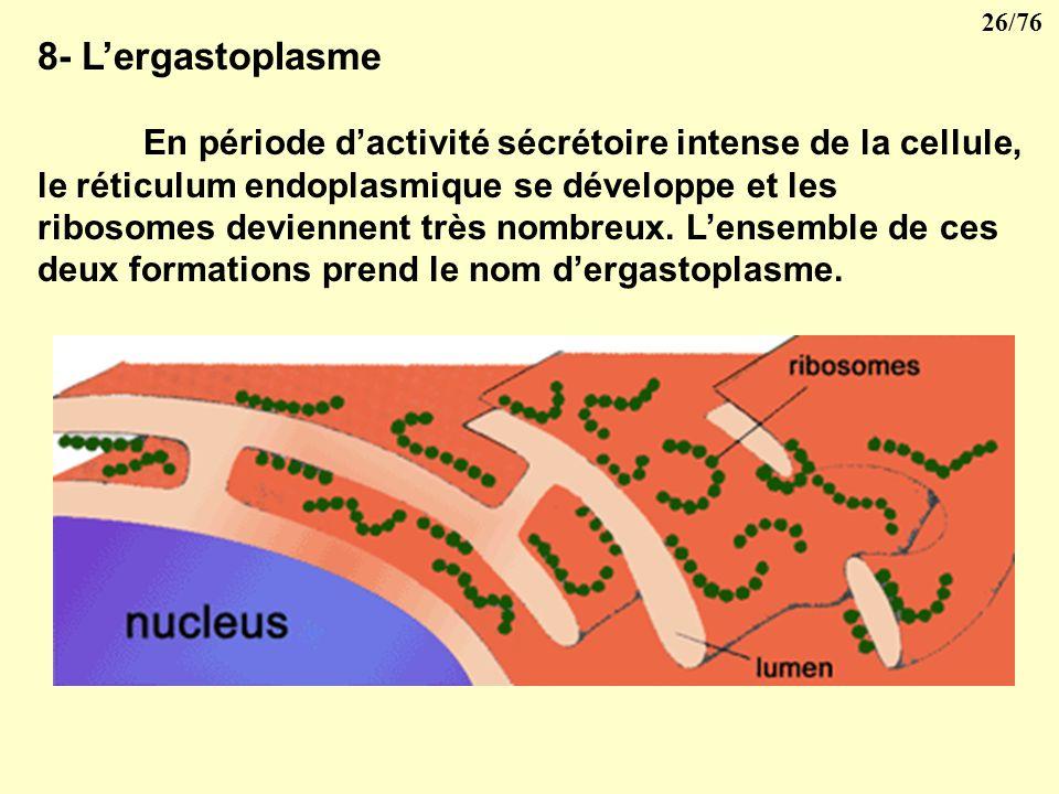 8- L'ergastoplasme