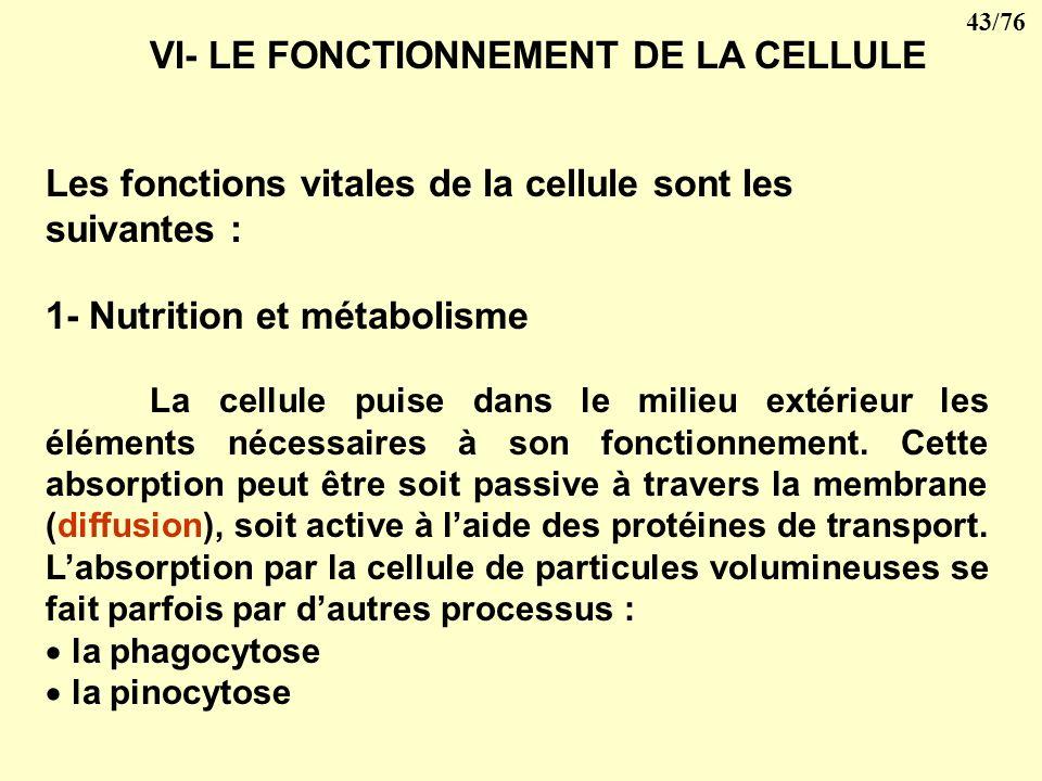 VI- LE FONCTIONNEMENT DE LA CELLULE