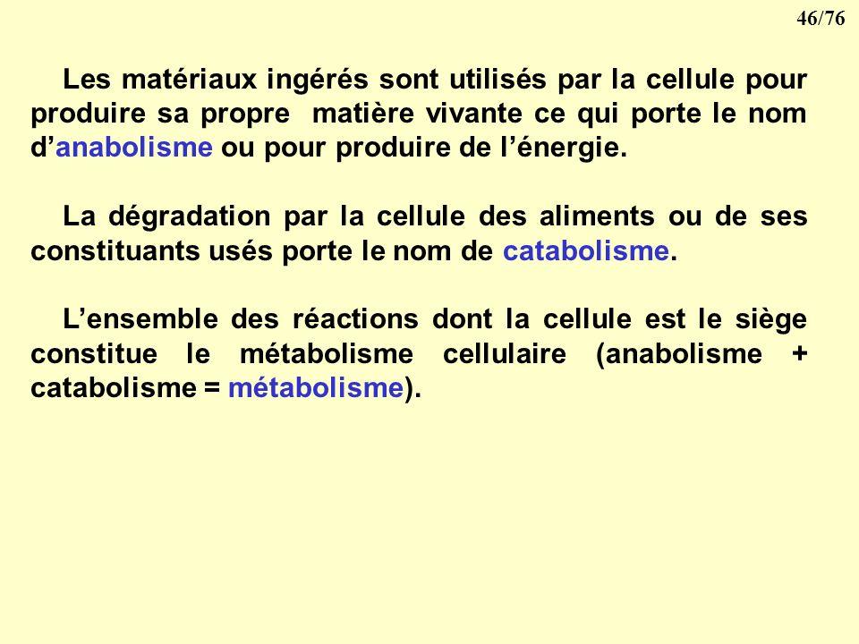 Les matériaux ingérés sont utilisés par la cellule pour produire sa propre matière vivante ce qui porte le nom d'anabolisme ou pour produire de l'énergie.