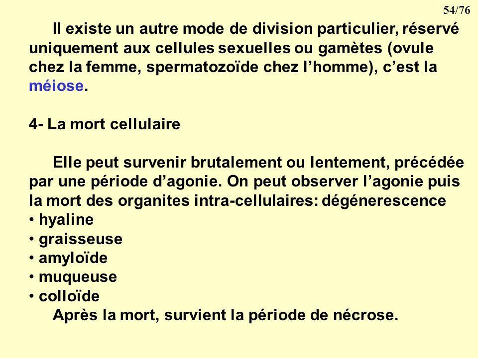 Il existe un autre mode de division particulier, réservé uniquement aux cellules sexuelles ou gamètes (ovule chez la femme, spermatozoïde chez l'homme), c'est la méiose.