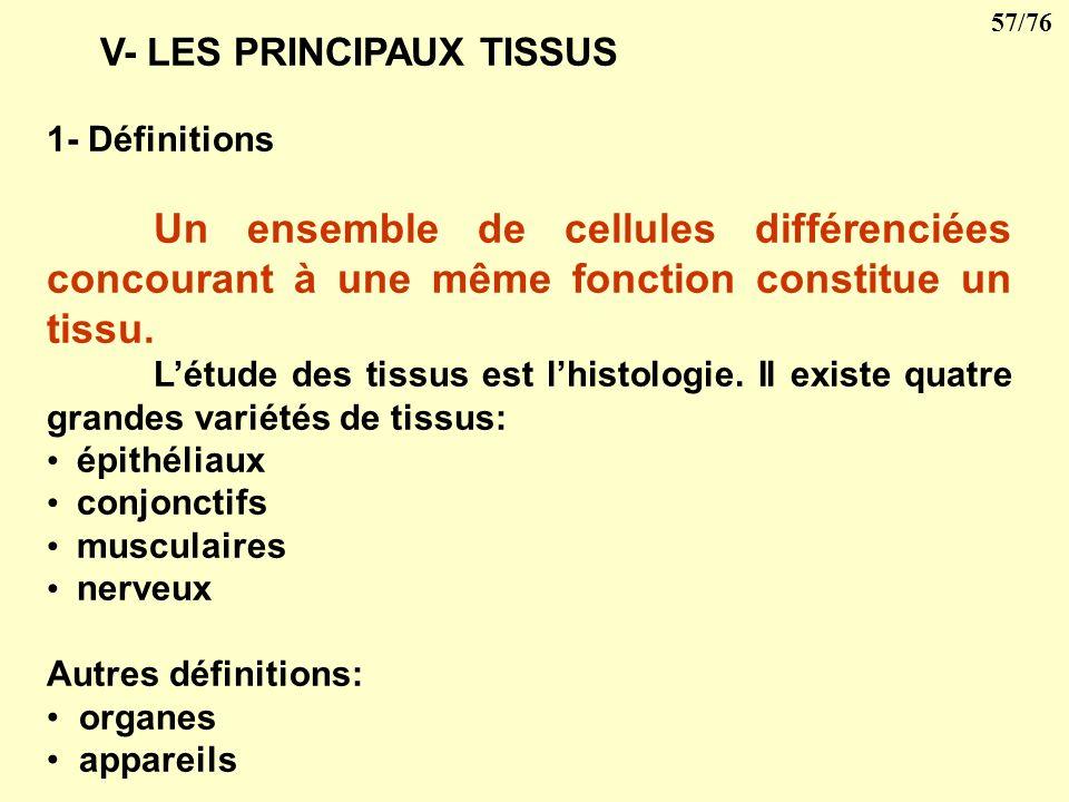 V- LES PRINCIPAUX TISSUS