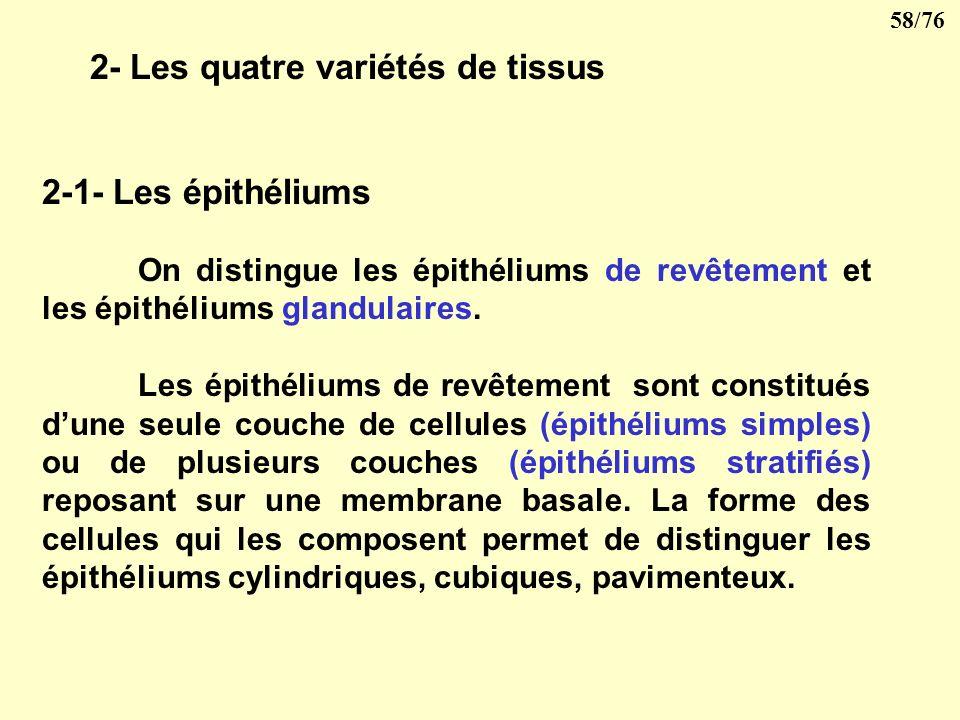 2- Les quatre variétés de tissus