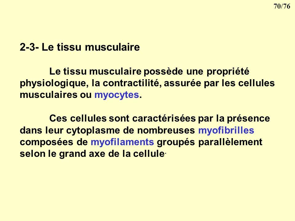 2-3- Le tissu musculaire Le tissu musculaire possède une propriété physiologique, la contractilité, assurée par les cellules musculaires ou myocytes.