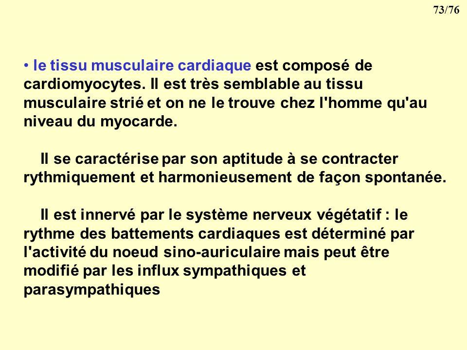 le tissu musculaire cardiaque est composé de cardiomyocytes