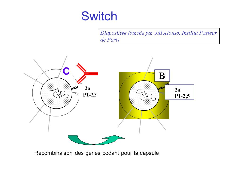 Switch C B Diapositive fournie par JM Alonso, Institut Pasteur