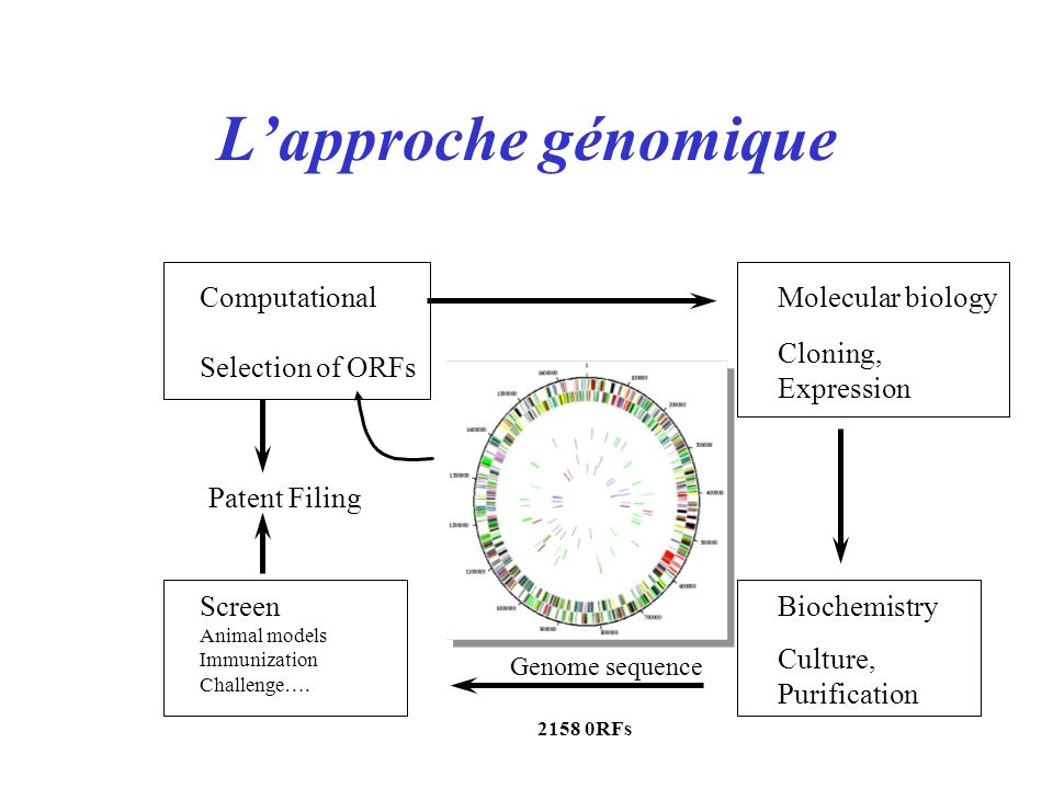 L'approche génomique Computational Selection of ORFs Molecular biology