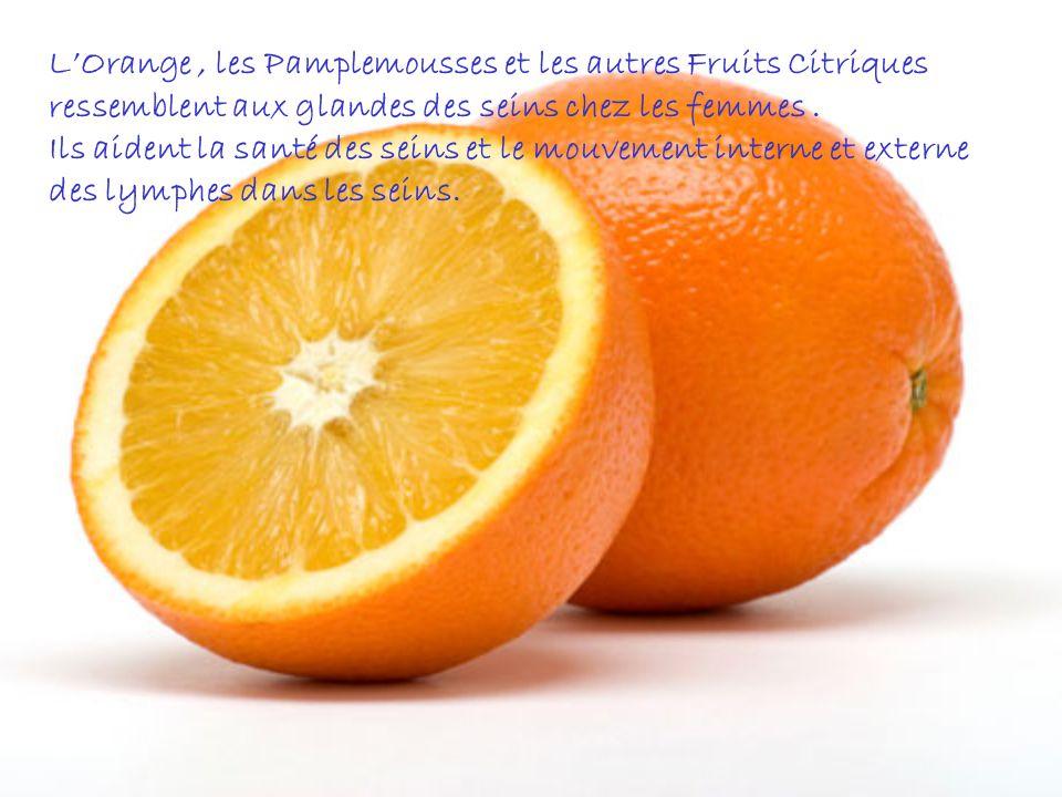 L'Orange , les Pamplemousses et les autres Fruits Citriques ressemblent aux glandes des seins chez les femmes .