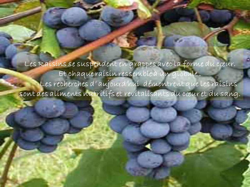 Les Raisins se suspendent en grappes avec la forme du cœur.
