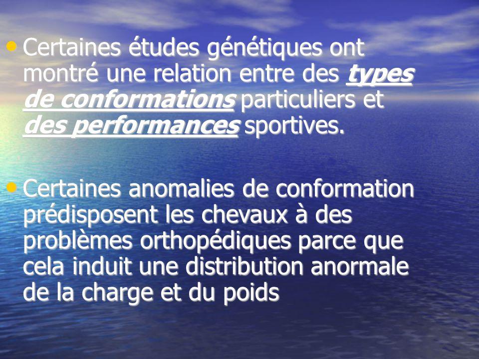 Certaines études génétiques ont montré une relation entre des types de conformations particuliers et des performances sportives.