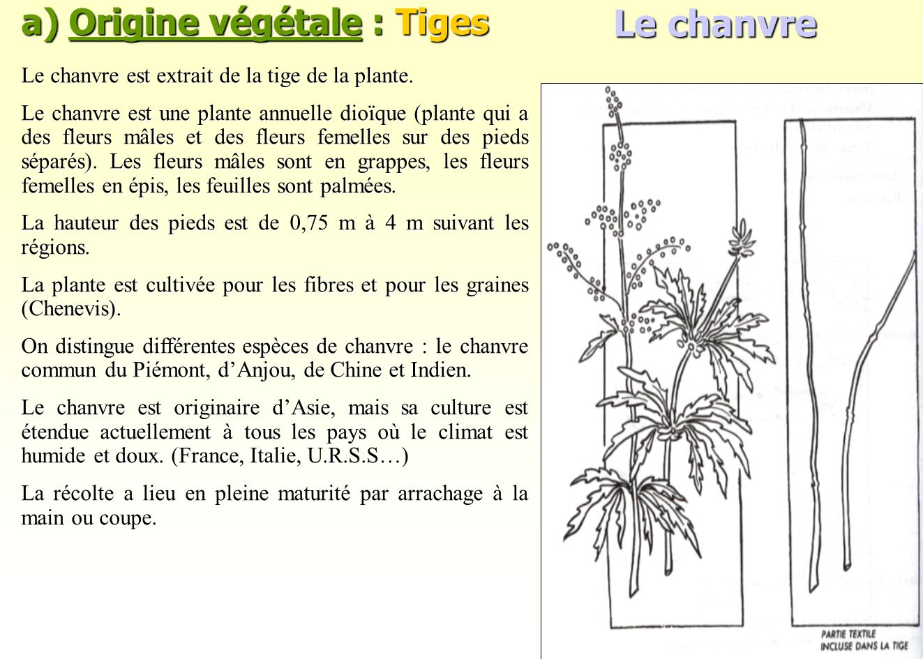 Le chanvre a) Origine végétale : Tiges