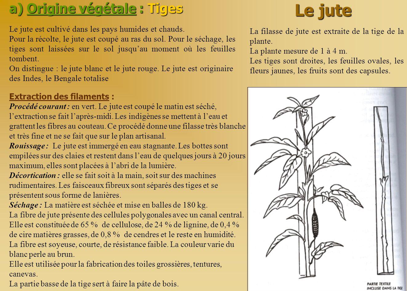 Le jute a) Origine végétale : Tiges