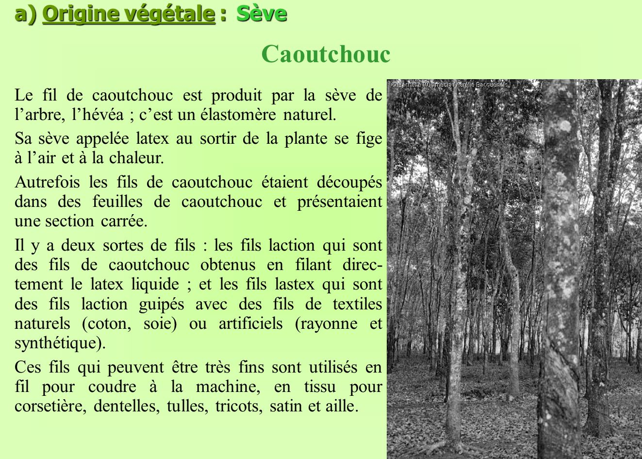 Caoutchouc a) Origine végétale : Sève