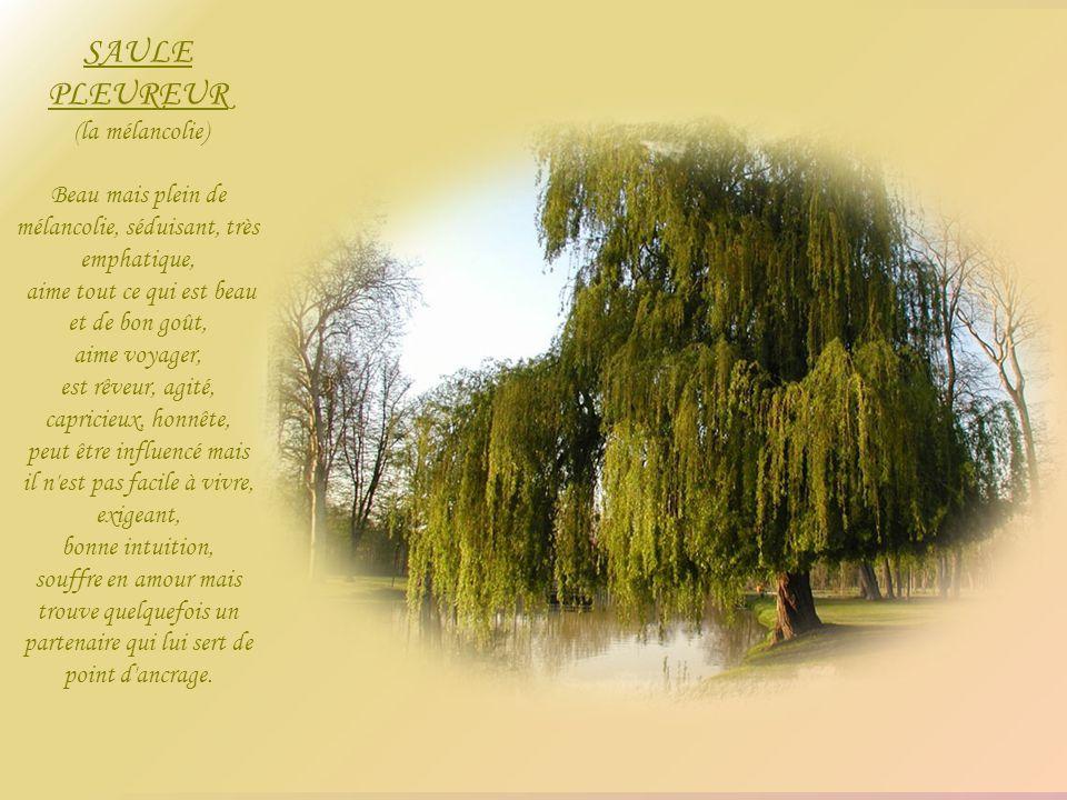 SAULE PLEUREUR (la mélancolie)