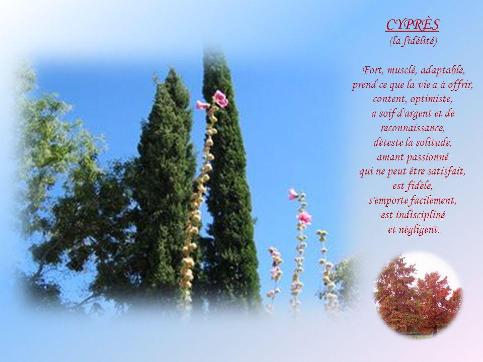 CYPRÈS (la fidélité) Fort, musclé, adaptable,
