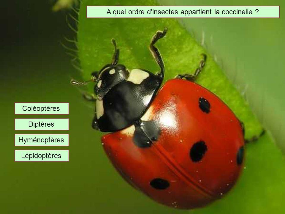 A quel ordre d'insectes appartient la coccinelle