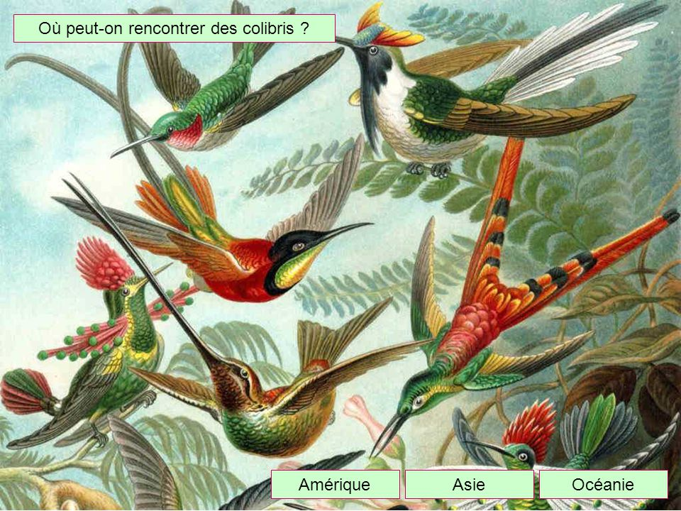 Où peut-on rencontrer des colibris