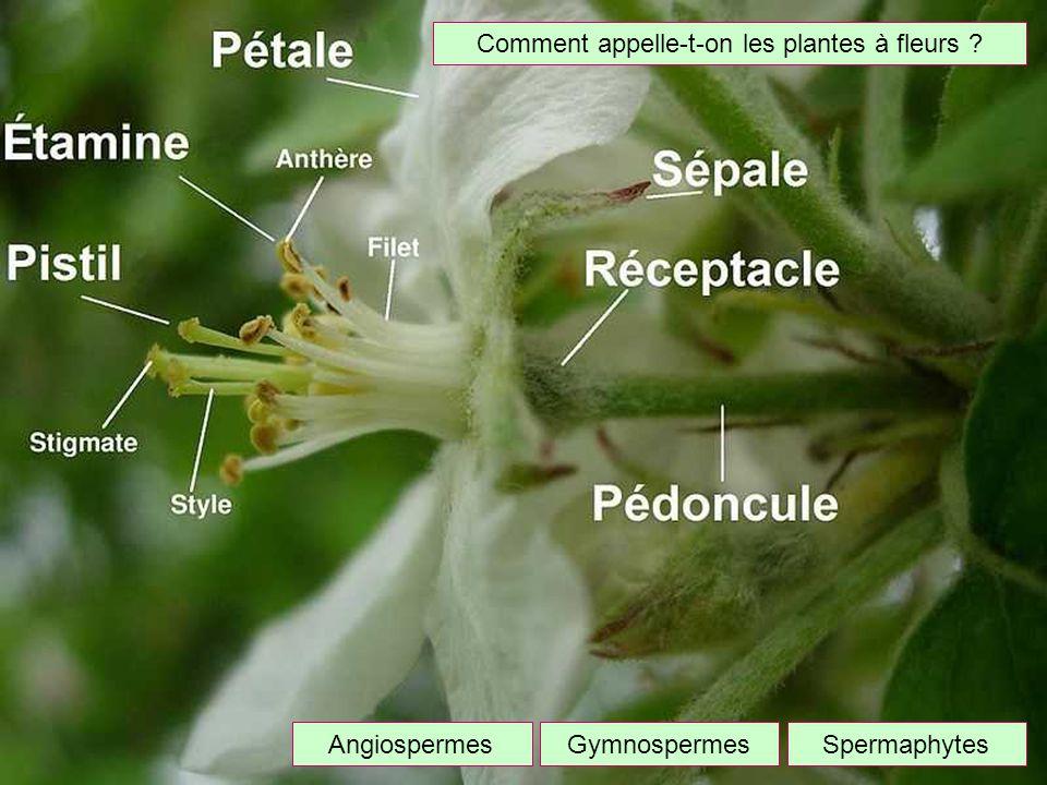 Comment appelle-t-on les plantes à fleurs