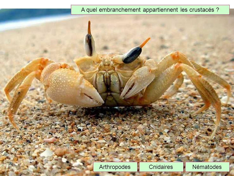 A quel embranchement appartiennent les crustacés