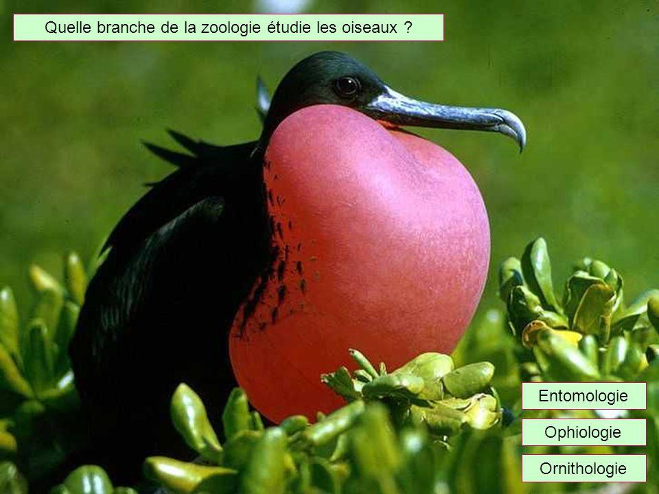 Quelle branche de la zoologie étudie les oiseaux