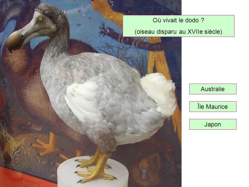 (oiseau disparu au XVIIe siècle)