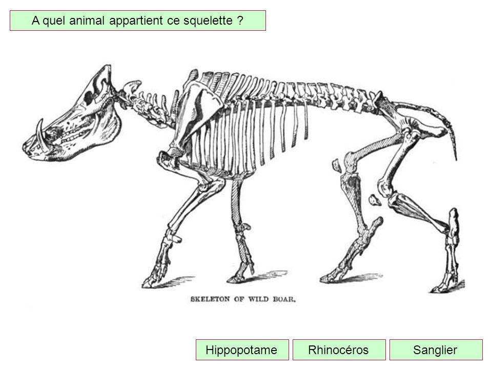 A quel animal appartient ce squelette