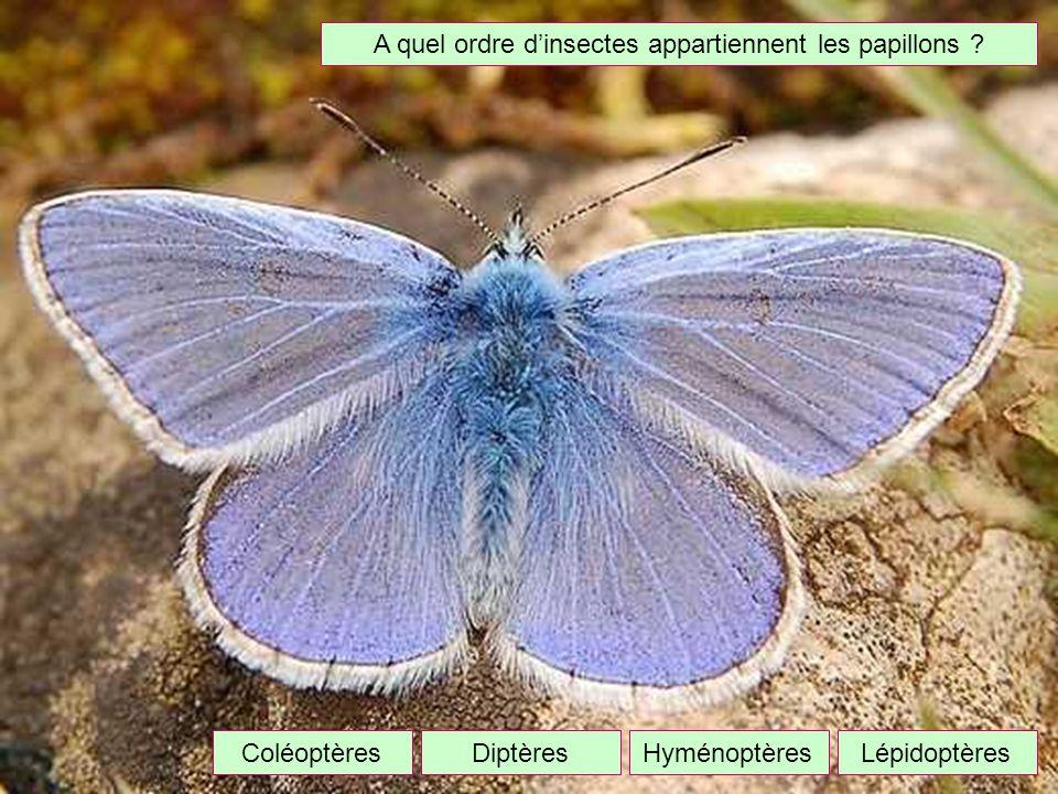 A quel ordre d'insectes appartiennent les papillons