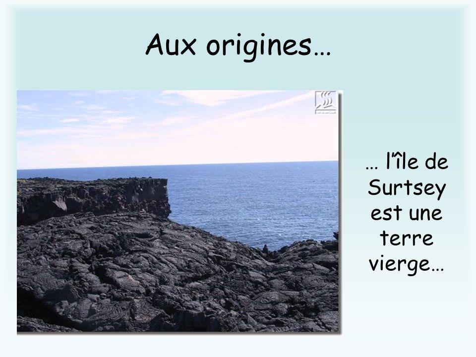 … l'île de Surtsey est une terre vierge…