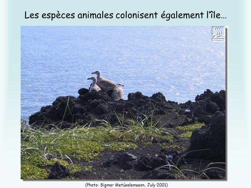 Les espèces animales colonisent également l'île…