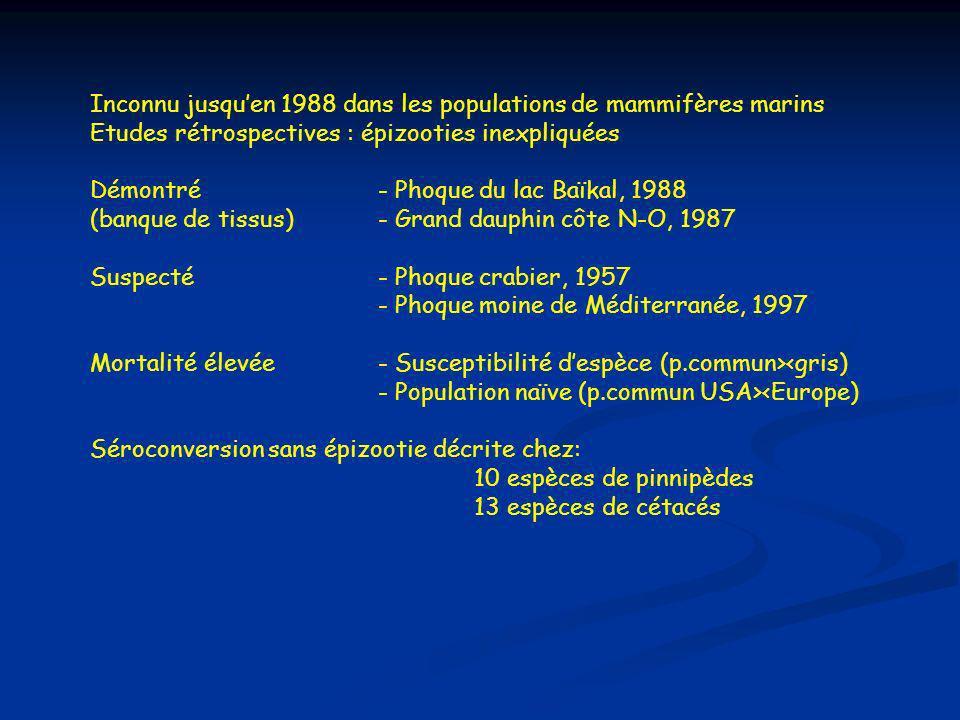 Inconnu jusqu'en 1988 dans les populations de mammifères marins