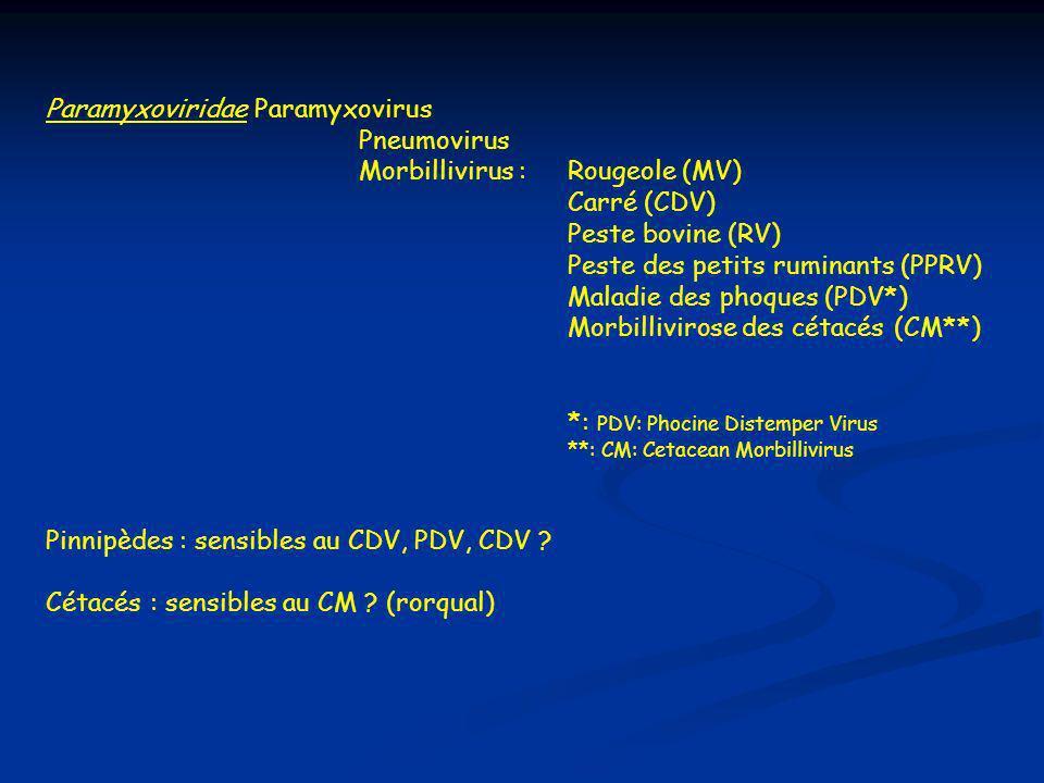 Paramyxoviridae Paramyxovirus Pneumovirus